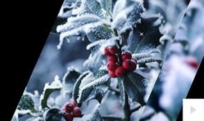 season views holiday e-card thumbnail