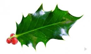 Holiday Holly ecard